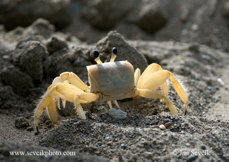Photo of crab krab